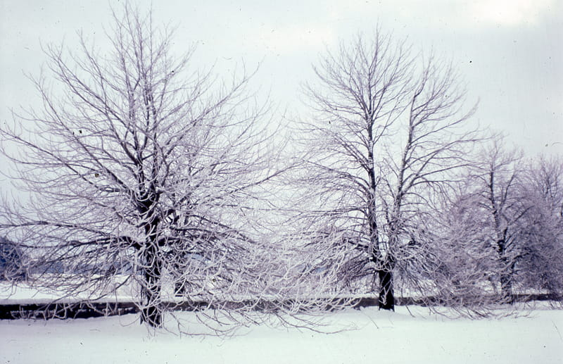 winter weather and dormant trees