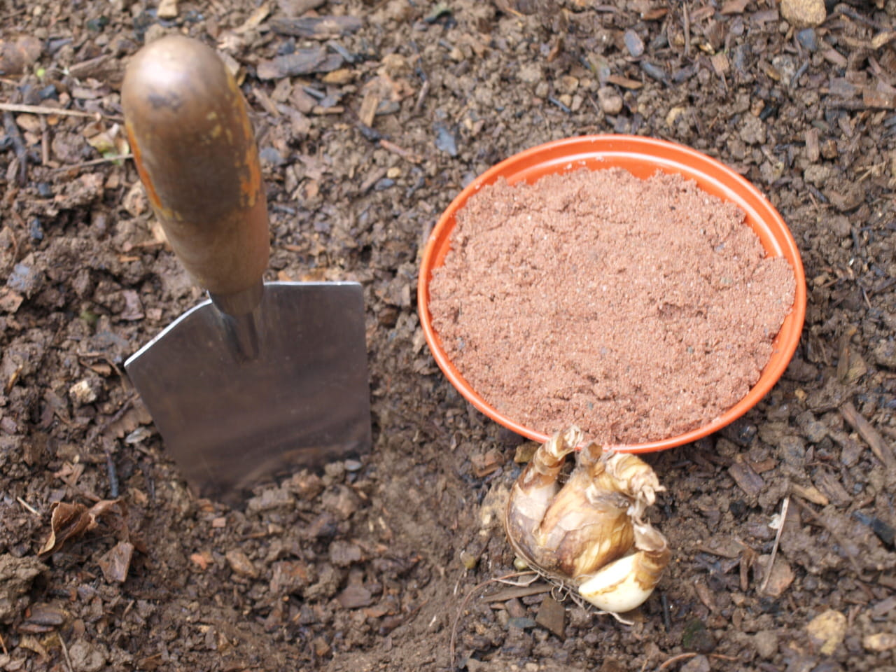 Technique for planting bulbs