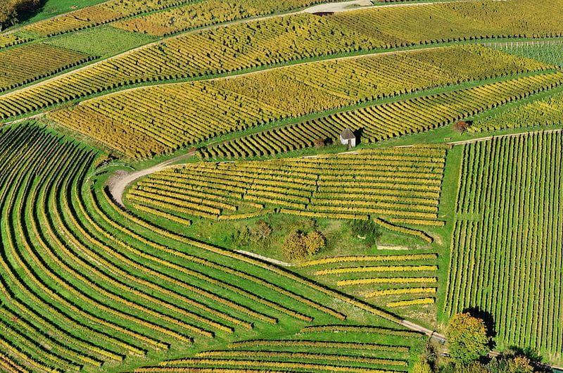 Vineyards in Germany