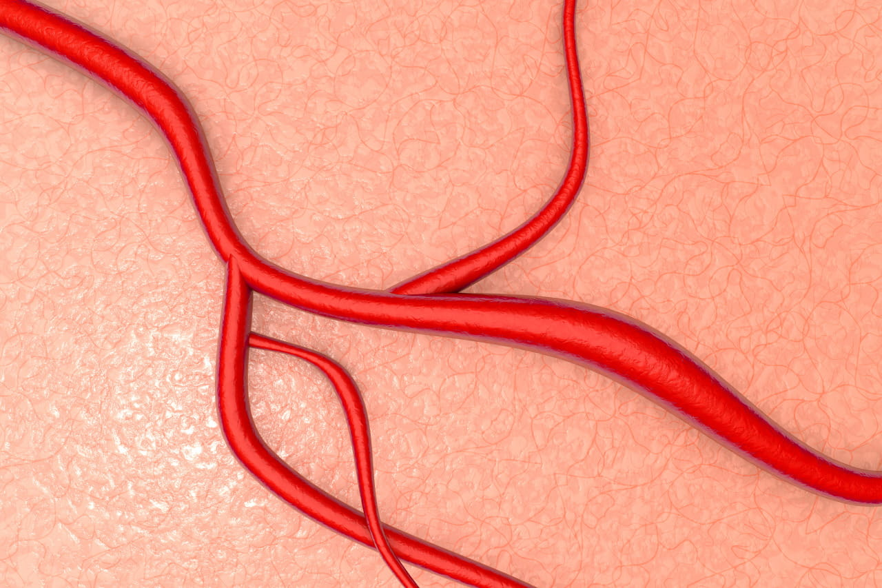A blood vessel on organic tissue