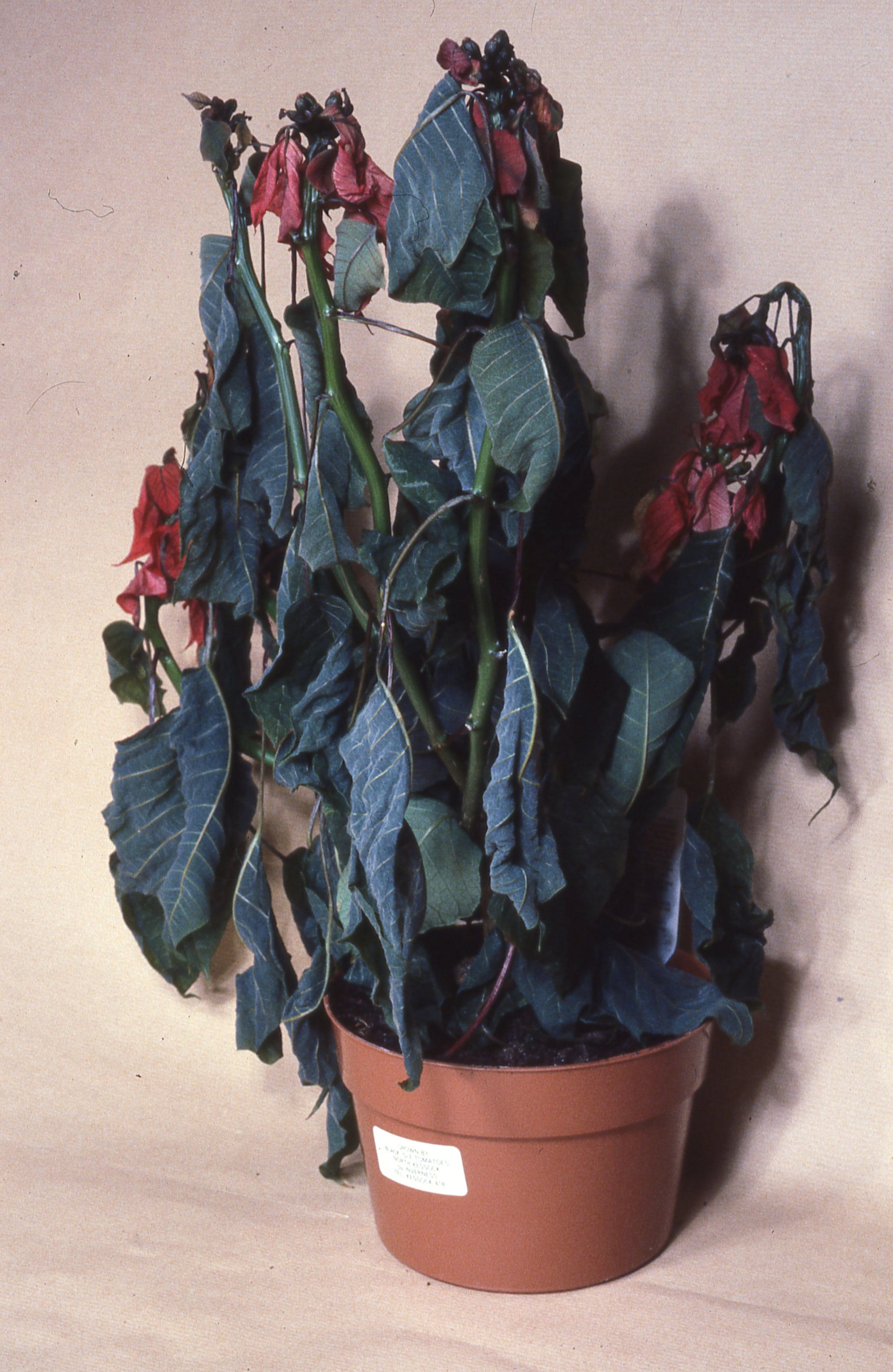 cold-damaged-plants