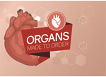 022 Organs made to order web