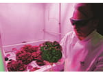 011 Scientist grows salad in space web