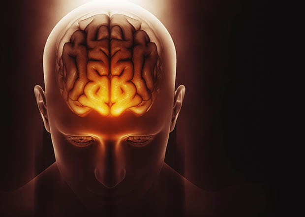 Despite Dearth Of Data Firms Sell Brain >> Society Of Chemical Industry Mini Brains