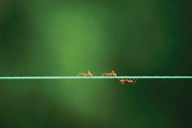Ants on string