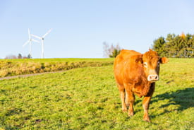 Cow and turbines