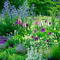 Cambridge Botanic Garden bee borders - photo Howard Rice