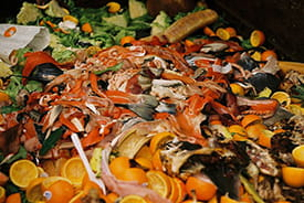 1.3 billion tonnes of food is wasted globally per year