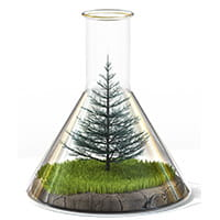 flask-with-tree
