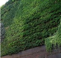 Green wall by Lupulo2010