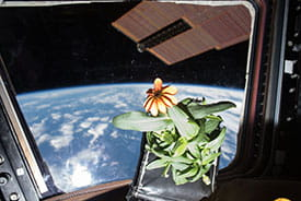 The possibility of astronauts being able to grow their own food has long been a focus for NASA.
