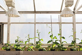 /-/media/Images/General/P2/plants-in-greenhouse.ashx?h=184&w=275&hash=1022AE9B6CF84B39B191CA2B6621E47A6173E5E3