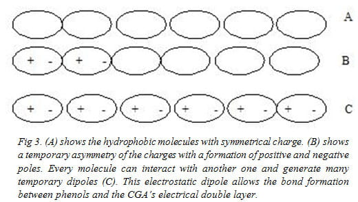 Fig 3. (A) shows the hydrophobic molecules with symmetrical charge. (B) shows a temporary asymmetry of the charges with a formation of positive and negative poles. Every molecule can interact with another one and generate many temporary dipoles (C). This electrostatic dipole allows the bond formation between phenols and the CGA's electrical double layer.