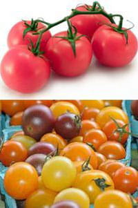 coloured_tomatoes (top) - Alina Zienowicz - CC-BY-SA,(bottom) - jammmick - CC-BY