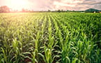 Feeding the future: crop protection