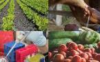 YR in Agri-Food 2017: Improving Nutrition by Design - New Developments from Plants to Packaging 28 June 2017